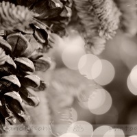 Day 356- Merry (Monochrome) Christmas