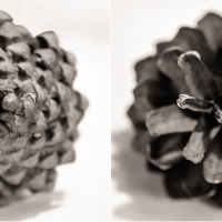 Day 284- Pine Cone