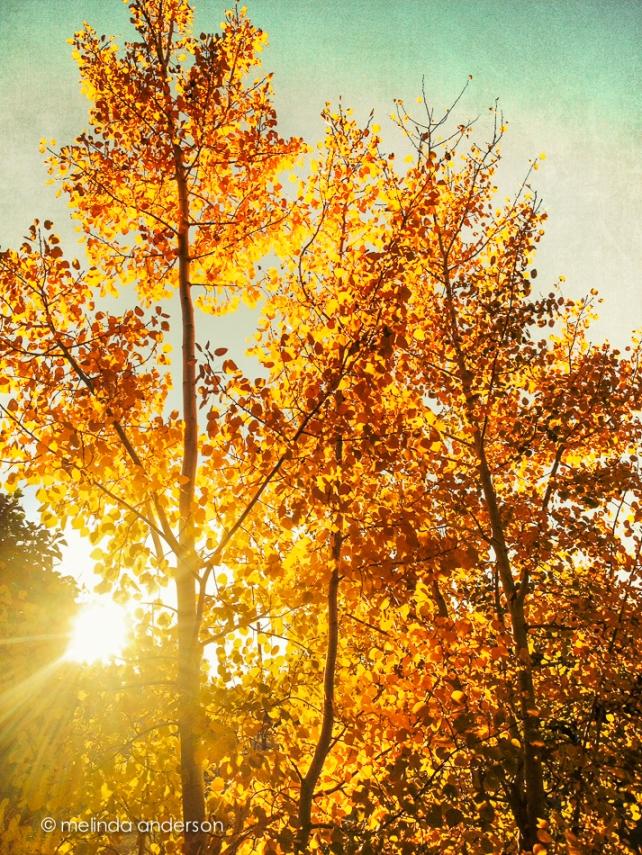 autumn-Edit