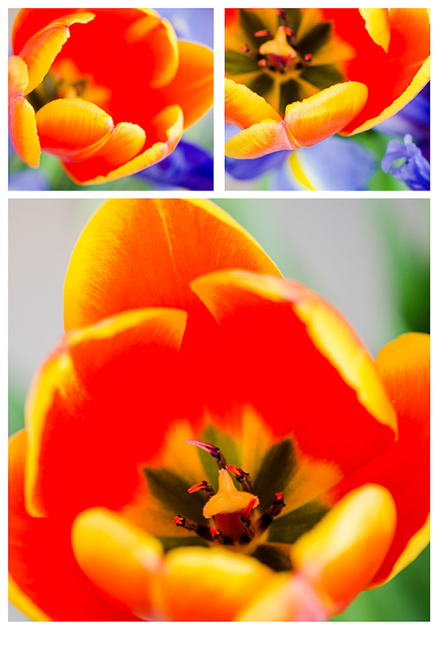 orange_tulip _layout