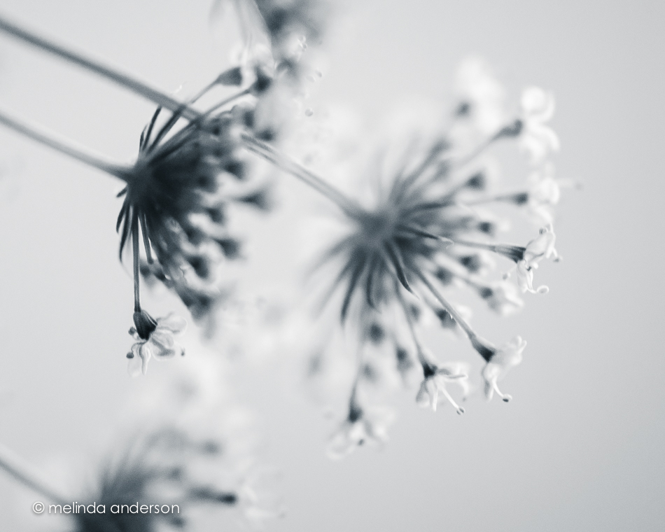 20140624-DSC_0291_melinda_anderson
