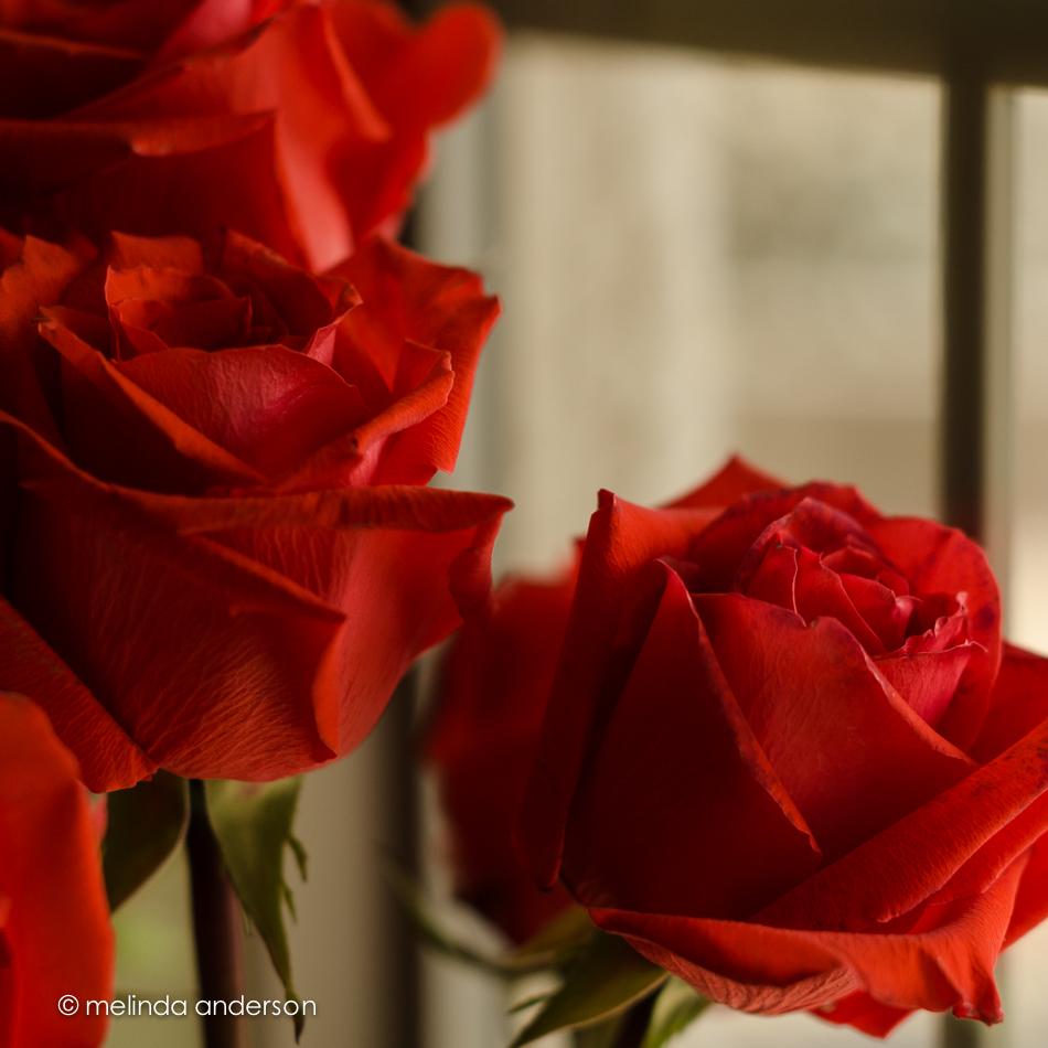 20140711-DSC_0928_melinda_anderson