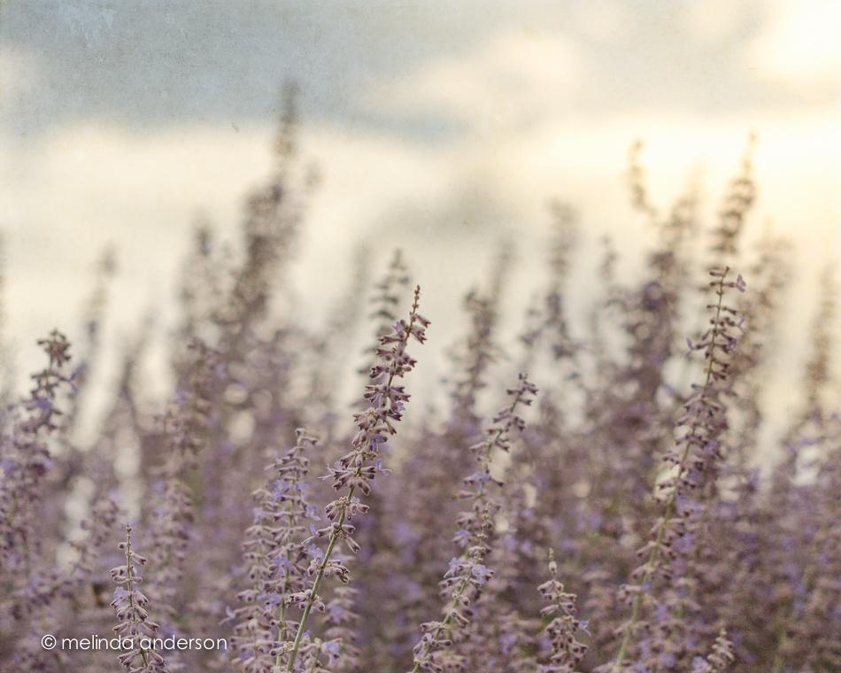20140724-DSC_1919_melinda_anderson-Edit