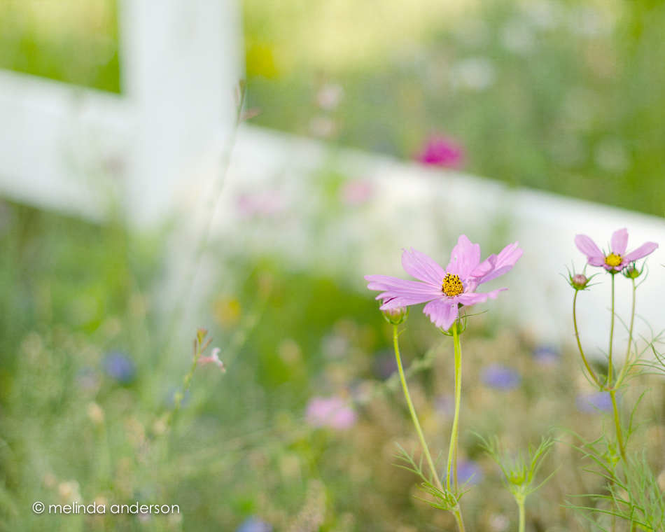 20140802-DSC_2568_melinda_anderson-Edit