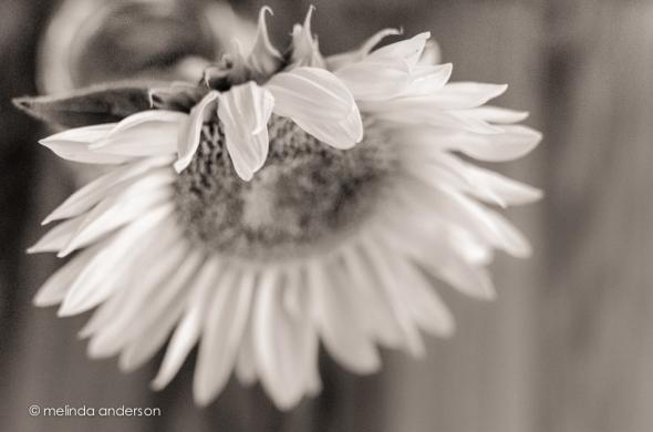 20140820-DSC_3134_melinda_anderson