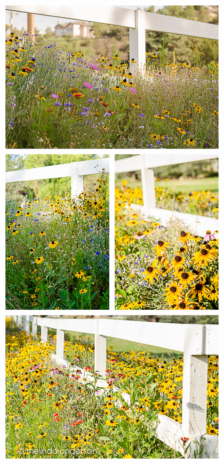 fence_layout