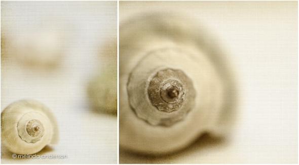 shells1_layout