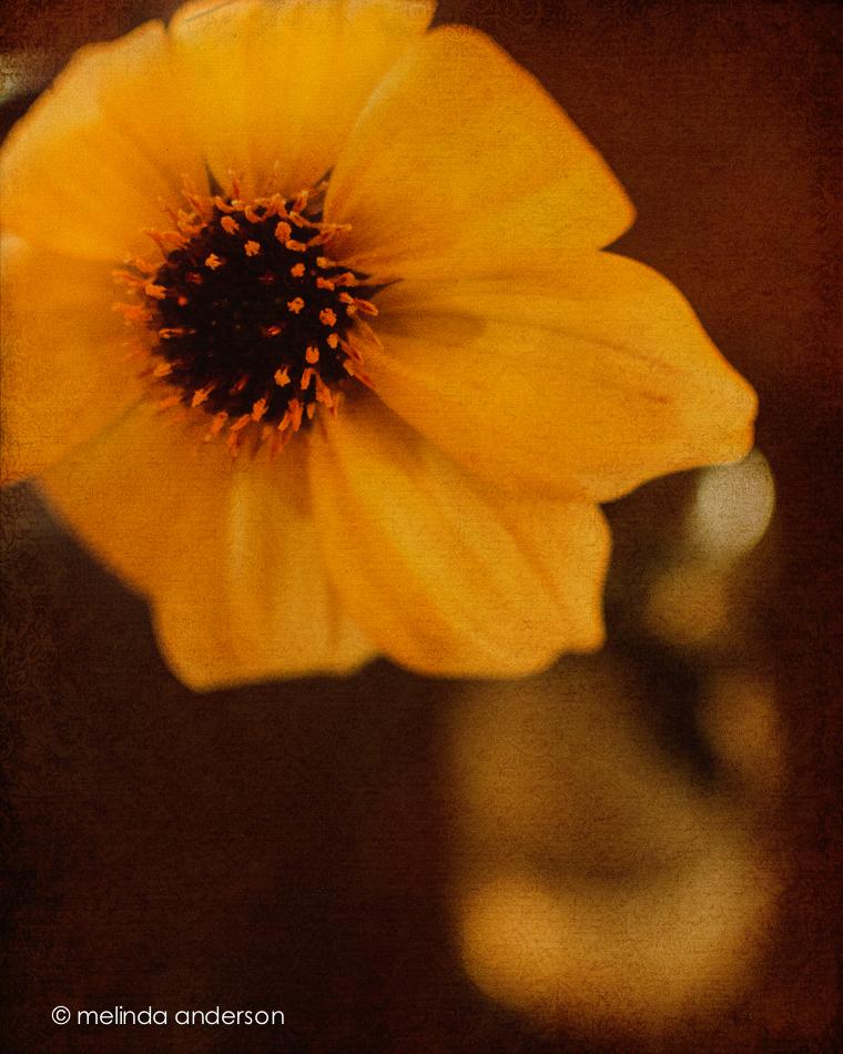 20140913-DSC_4037_melinda_anderson-Edit