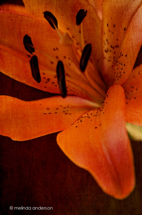 20140922-DSC_4240_melinda_anderson-Edit