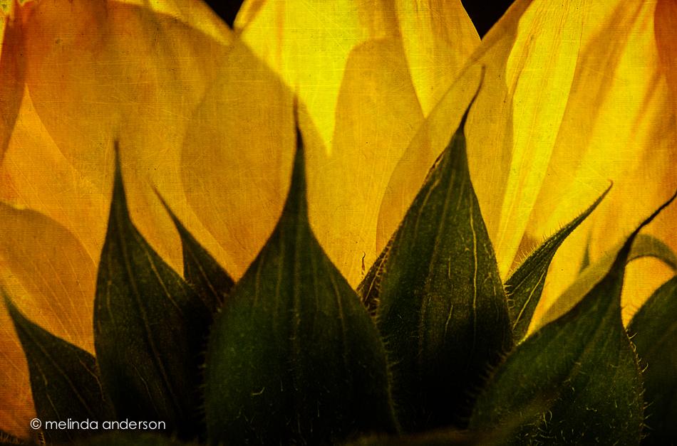 20140924-DSC_4281_melinda_anderson-Edit