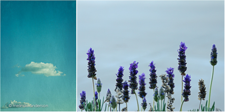 sky_and_lavender
