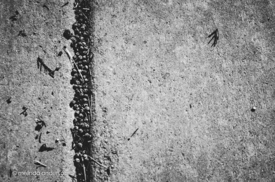 20141115-DSC_6832_melinda_anderson-2