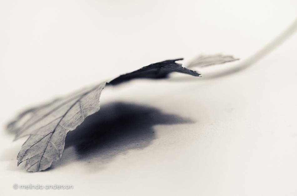 20141118-DSC_6938_melinda_anderson