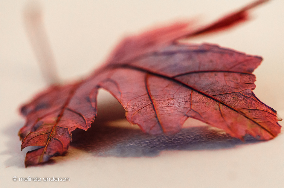 20141118-DSC_6967_melinda_anderson