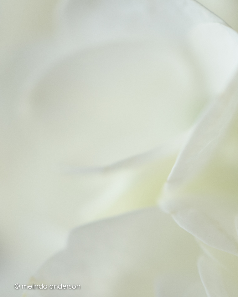 20141125-DSC_7210_melinda_anderson