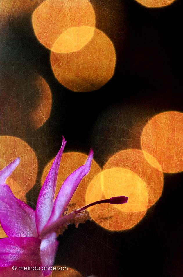 20141217-DSC_7848_melinda_anderson-Edit