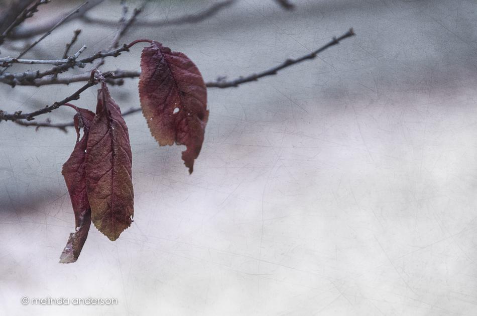 20141218-DSC_7855_melinda_anderson-Edit