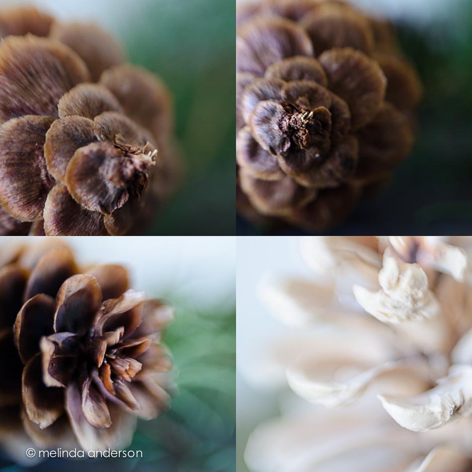 pineconemacros