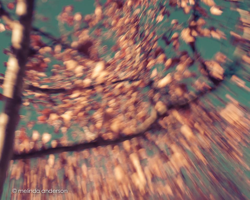 20150201-DSC_1915_melinda_anderson