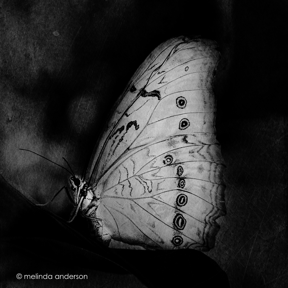 20150421-MMA_3981_melinda_anderson-Edit