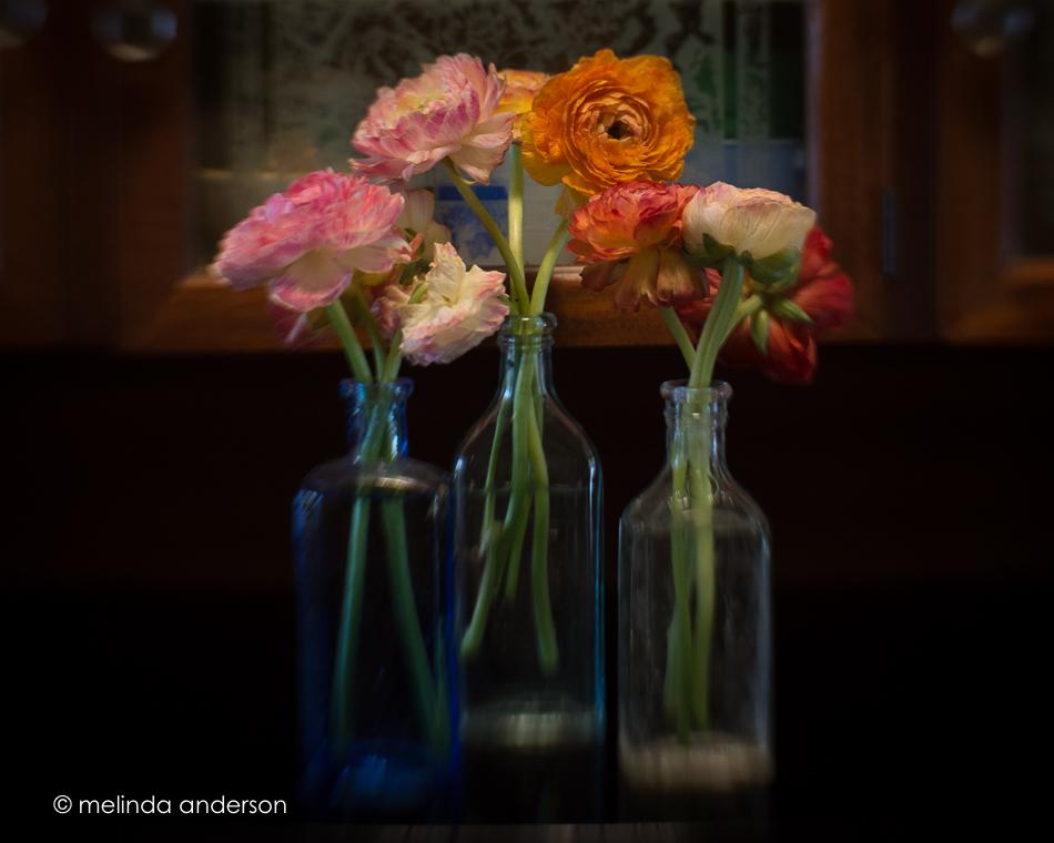 20150509-MMA_5062_melinda_anderson