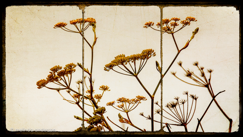 weeds_triptych-Edit