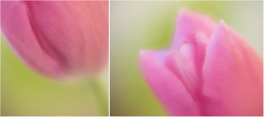 tulip_diptych