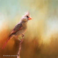Upcycled Cardinal