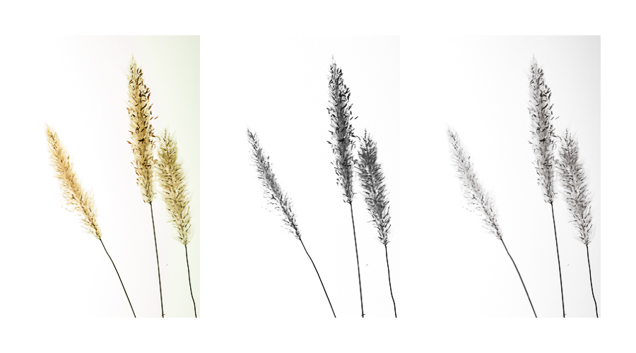 weed_triptych