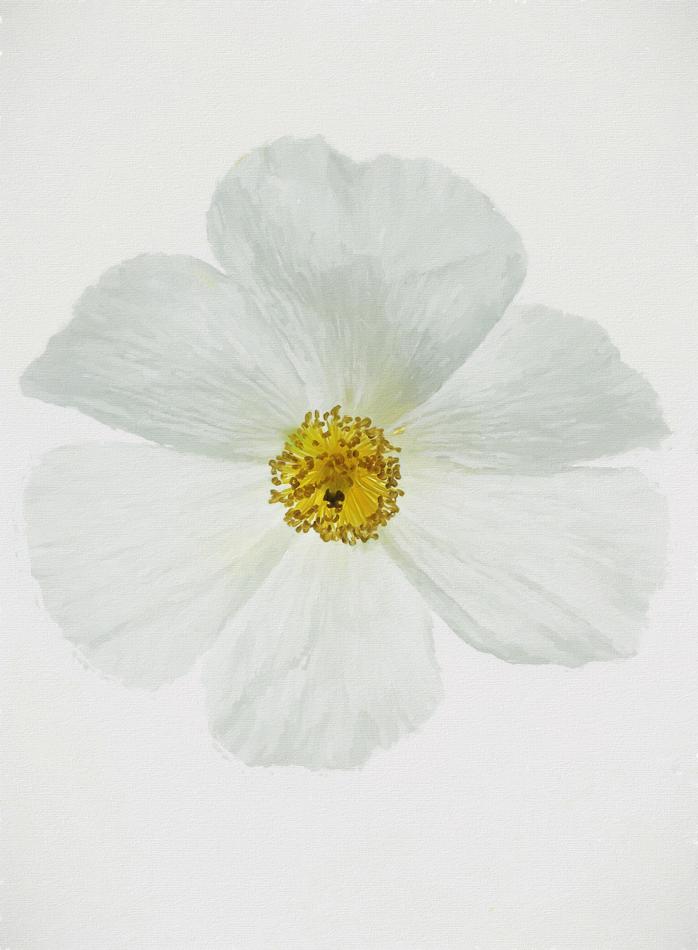 Henry_flower