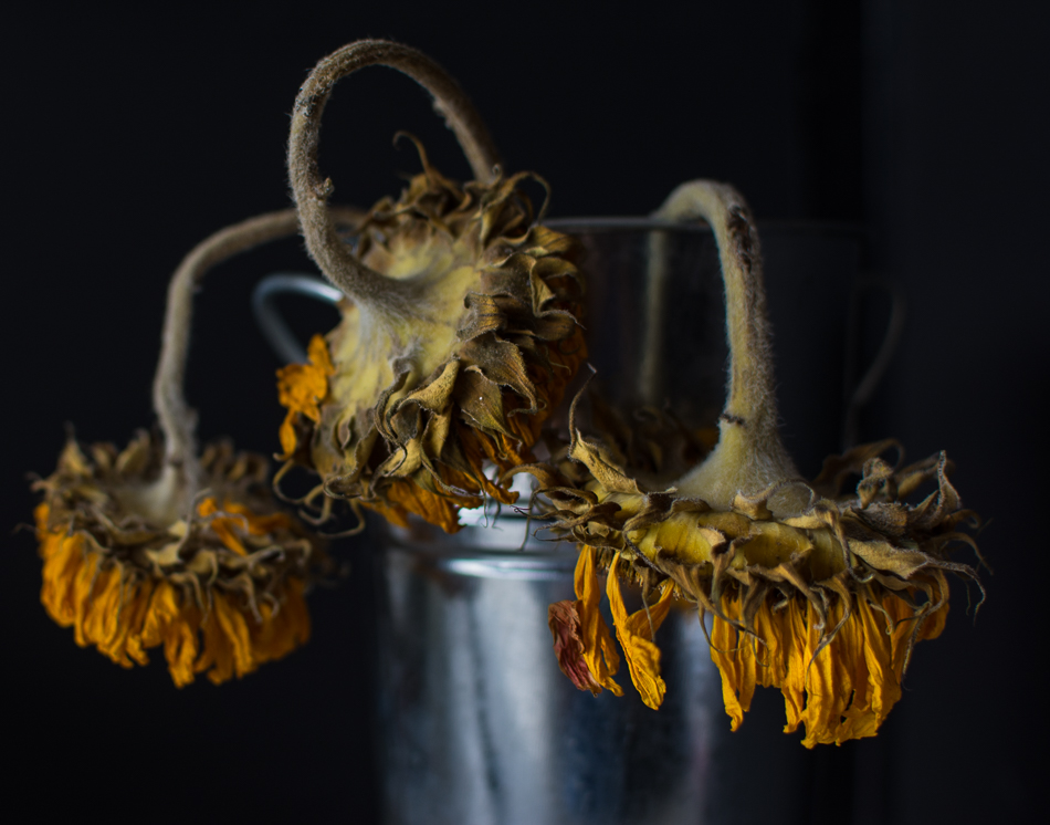 More Decaying Sunflowers