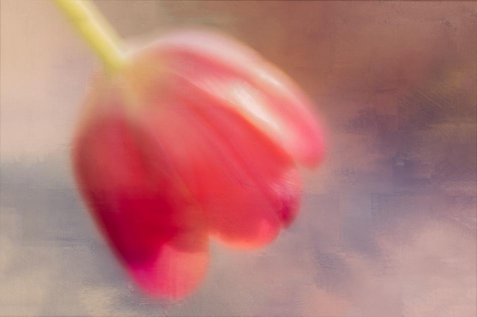 20170202-mma_2156_melinda_anderson-edit