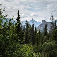 Alaskan Thumb