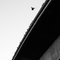 Freeway Birds