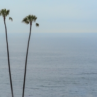 Just Palms and Ocean