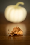 20181005-LIN_9288untitled