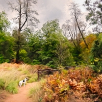 A Dog on the Path
