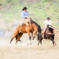 Gardiner Rodeo 2014