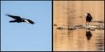 raven diptych 2